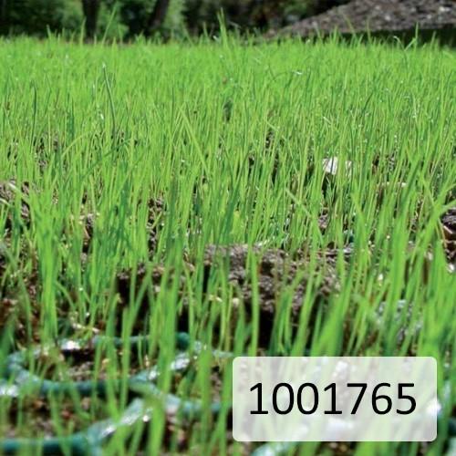 Reinforcement Mesh Lattice Green 2000mm Wide x 4mm